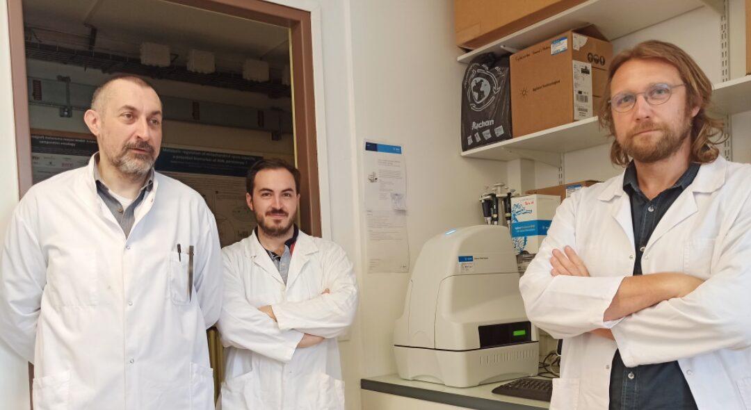 La respiration des cellules cancéreuses au service d'une médecine personnalisée